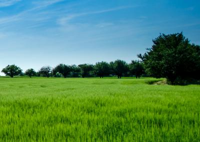 Vereniging Nederlands Cultuurlandschap – natuurbescherming
